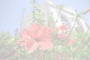Yogahalle mit Blüte im Yogaurlaub mit Satya Yoga aus Besse